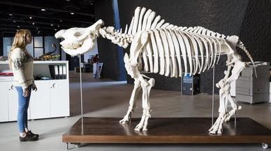 El rinoceronte olvidado del parque Güell