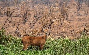 Daños ecológicos por los incendios forestales en Brasil.