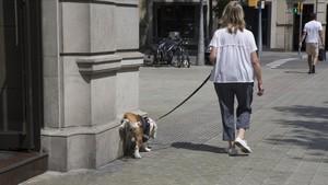 Un perro orina en la Diagonal.