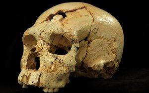 El cráneo, con dos orificios, de la víctima del primer asesinato documentado de la historia, hace 430.000 años,en Atapuerca.