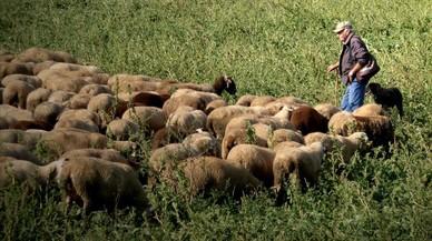 Necesitamos a los pastores
