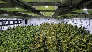 El Canadà viu la febre verda del negoci del cànnabis després de la legalització