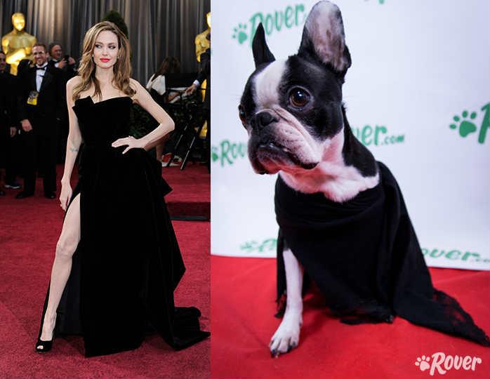 Un timelapse de los perros de la oficina Rover.com recrean algunos looks de la alfombra roja de los Oscars.