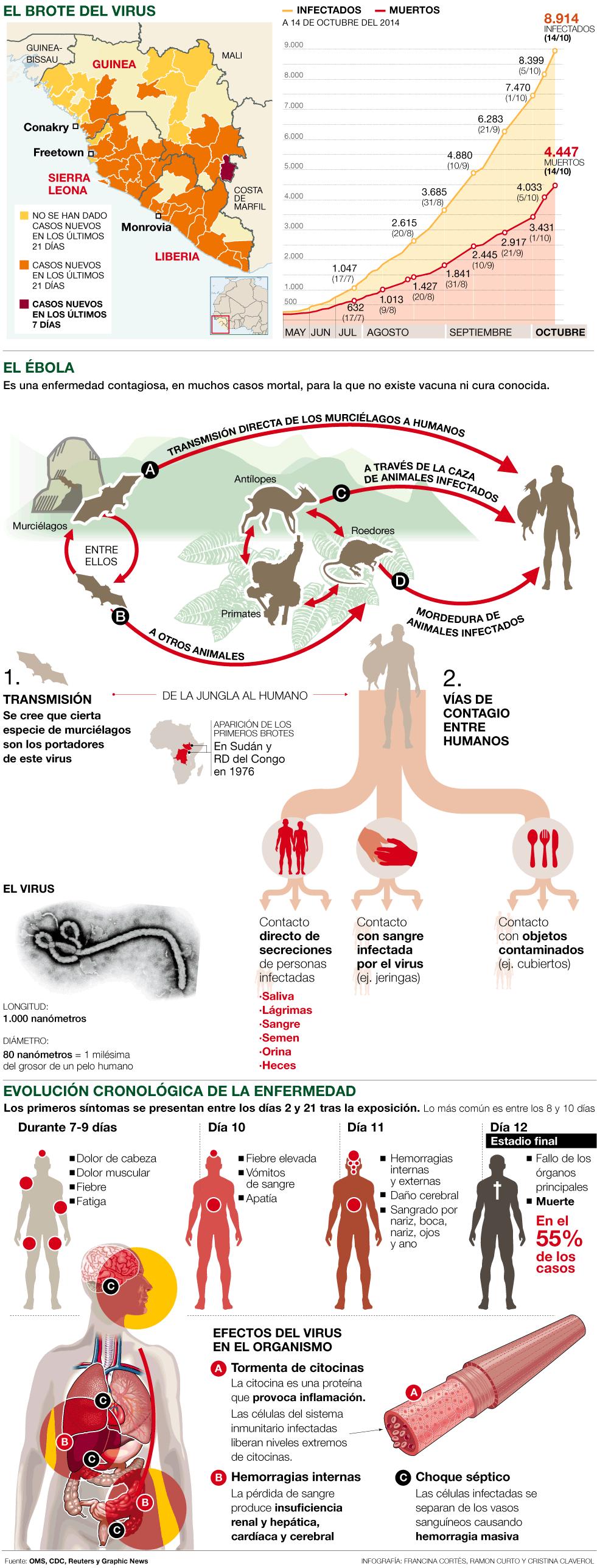 ebola brote zonas transmision